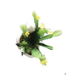 Poule Plantes Grasses Intemporelles