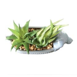 Chien Plantes Grasses Intemporelles