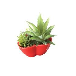 Cœur Rouge Plantes Grasses Intemporelles