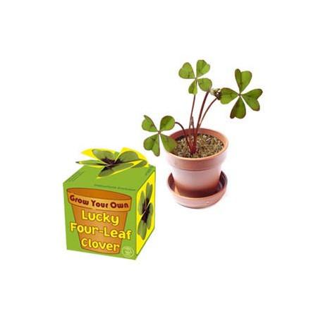 Mettez toutes les chances de votre côté pour que la réussite soit avec vous tout au long de l'année ! Jouez au petit jardinier et faites pousser vos propres trèfles à quatre feuilles...