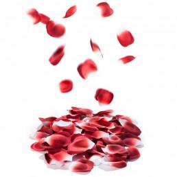 Pétales de Roses Parfumés Explosion